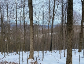 Wooded Recreation - Recreational wooded land