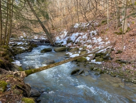 Wooded Retreat with Stream - Scenic Stream