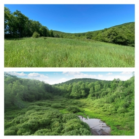 Corner of the Catskills - Meadow with Views