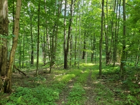 Wooded Lot on Sunrise Mountain Rd - Located on Private Road