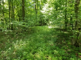 Beautiful Townsend Hollow Road - Pending