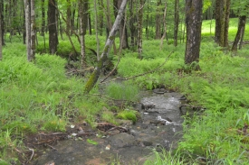 4.9 Acres of Land with Stream - Land with Stream